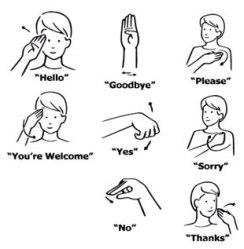 NIDCD-ASL-Phrases