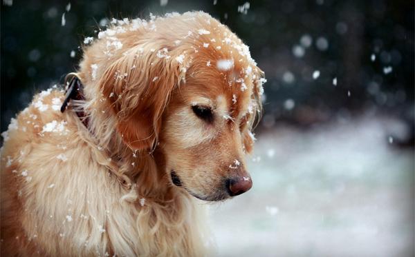 14-winter-photography-ideas-winter-tips