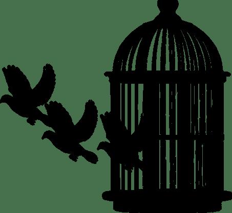 bird-3879179_960_720